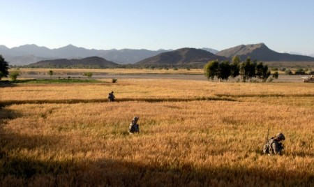 Wheat fields, Khowst Province, Afghanistan.
