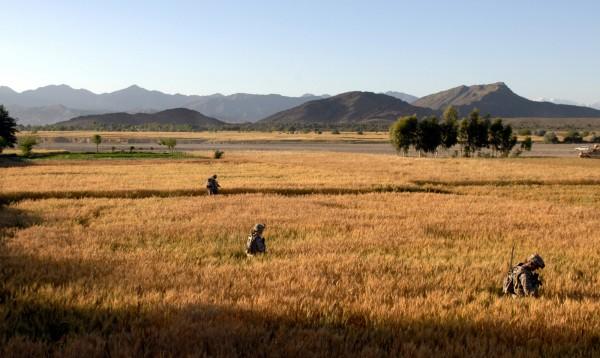 Wheat fields, Khowst Province, Afghanistan.